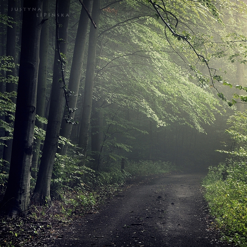 Green Forest by Justine1985