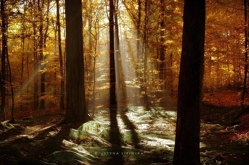 Fotografija dana - Page 5 Golden_polish_autumn_by_justine1985-d9ejjsa