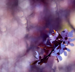 May Blossom by Justine1985