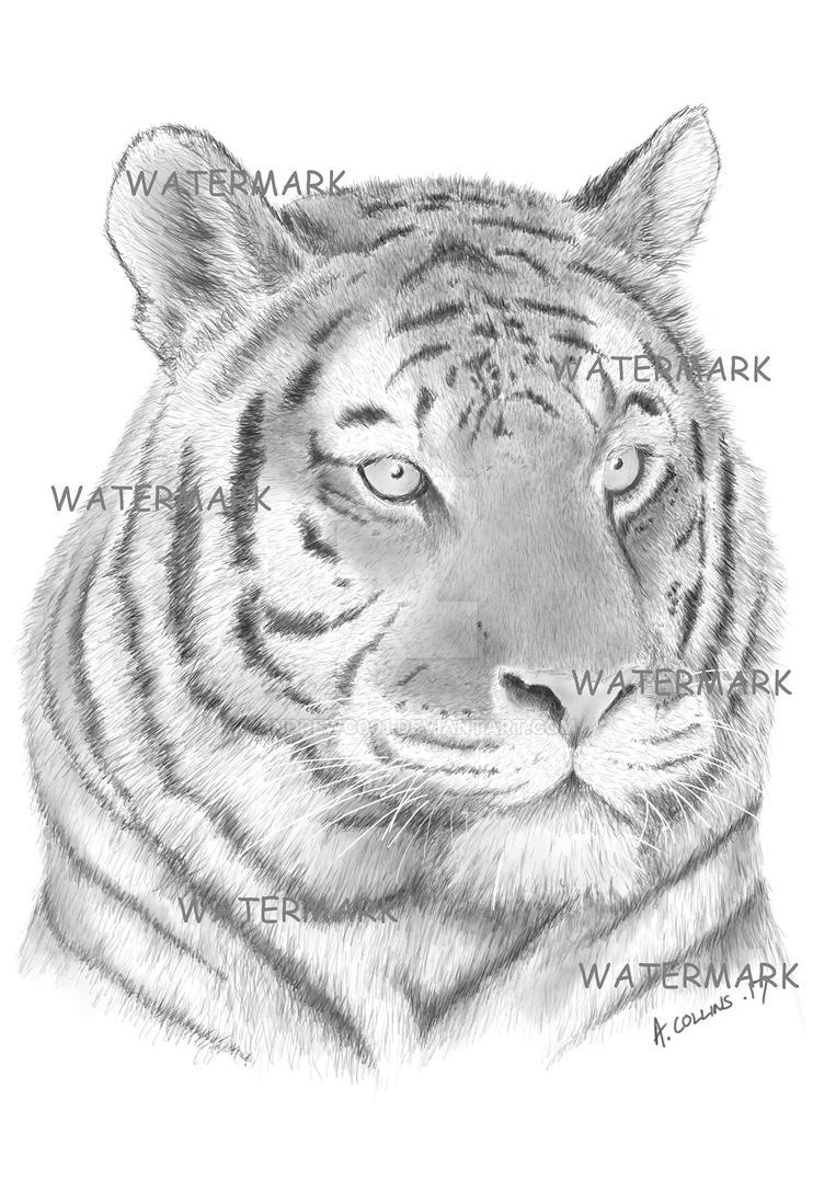 Tiger sketch by AndrewC001
