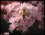 Flowers and Bee Lieb Cellars