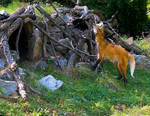 Maned Wolf No. 2 STOCK