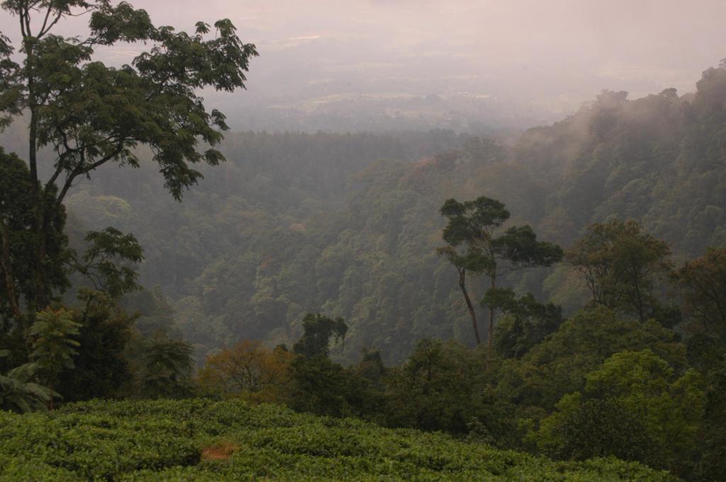 tea fog