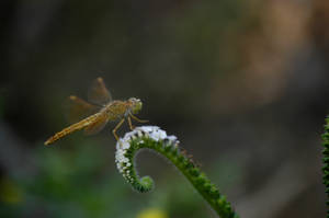 dragonfly by blur-stock