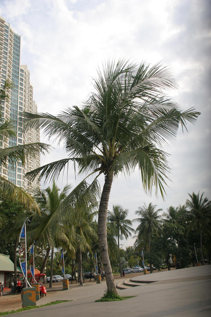 coconut tree by blur-stock