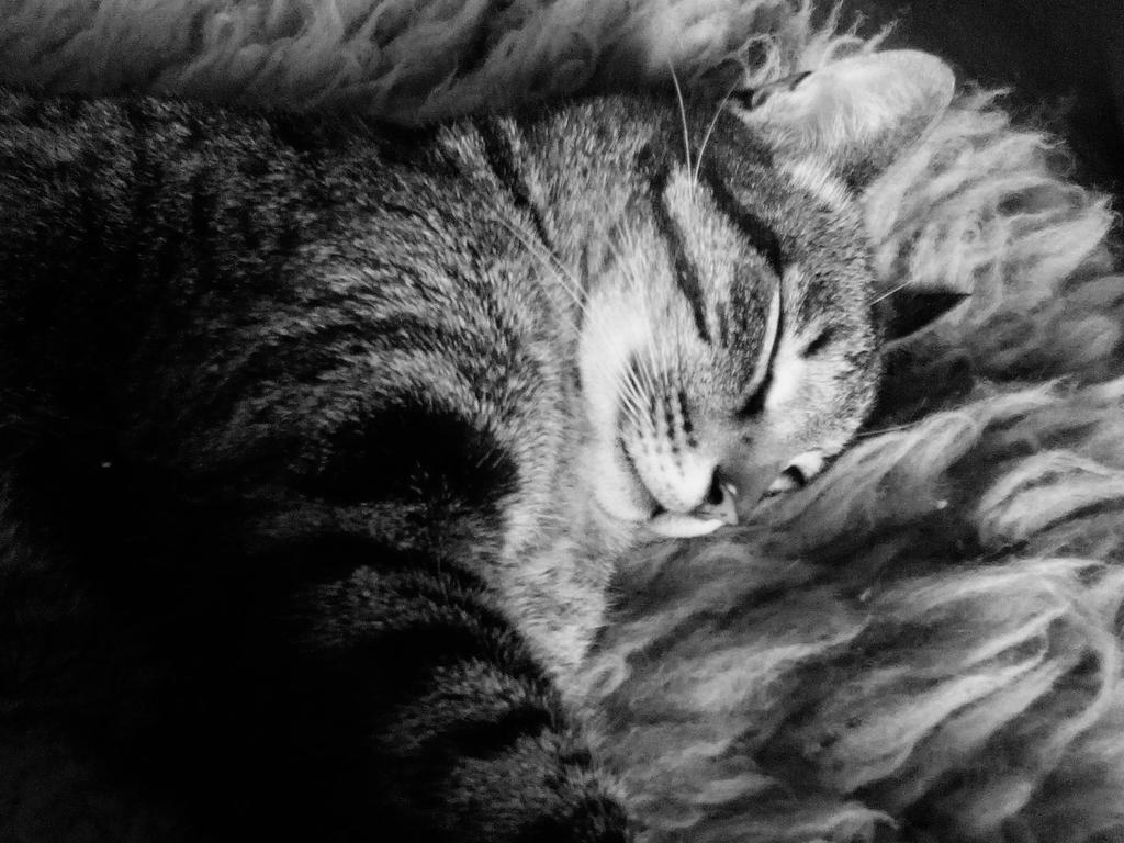 Sleeping cat by The5tream
