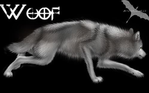 Wolf by Shadowwolf