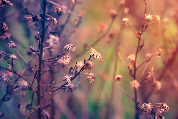 I feel like enchanted by EliasPh