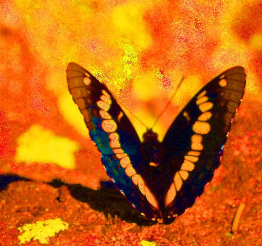 Leptiri Summer_butterfly_1_by_anniebanannie123