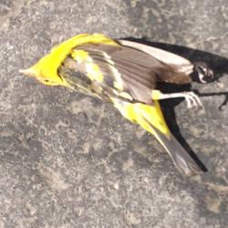 not winter but a bird