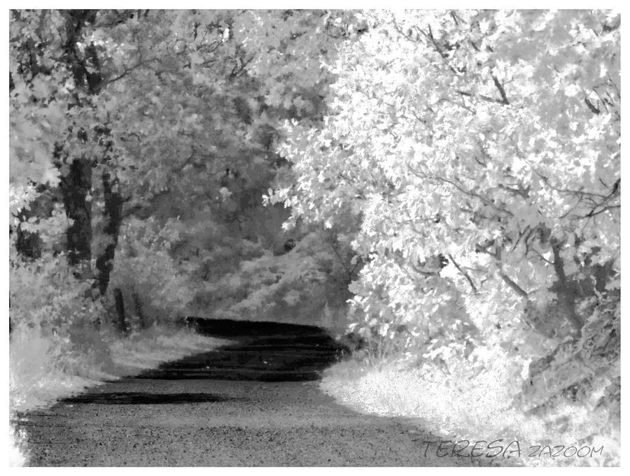 Forest_by_ZaZoom.jpg