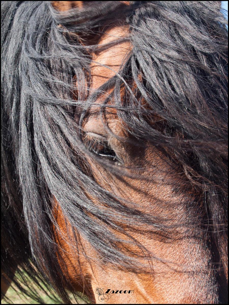 horse_ii_by_zazoom-d3nea9r.jpg