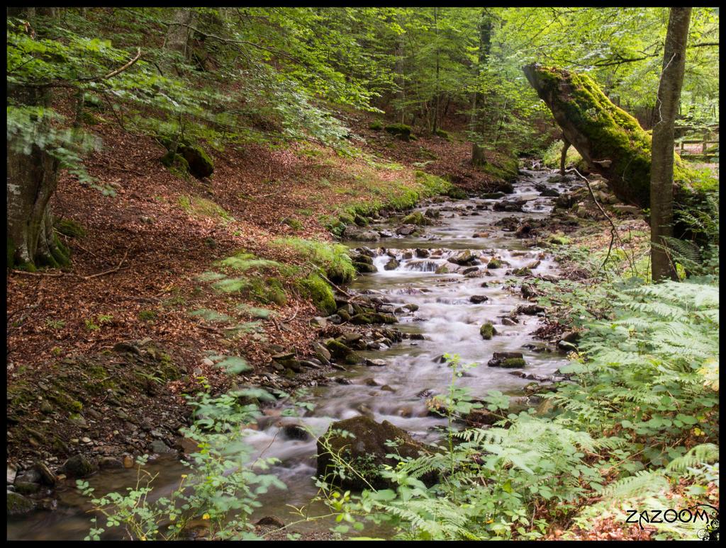 beech_and_river_i_by_zazoom-d6ho7ze.jpg