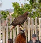 Bird (Stock 6)