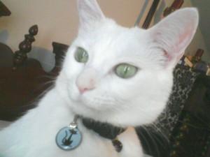 auntieomega's Profile Picture