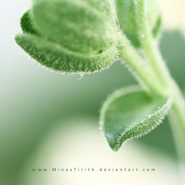 calm green by minastirith on deviantart