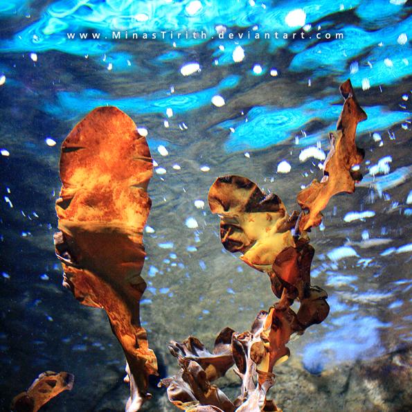 Underwater Dance by MinasTirith