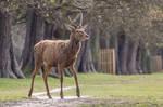 Red Deer Stock 2