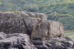 Rock Stock 1