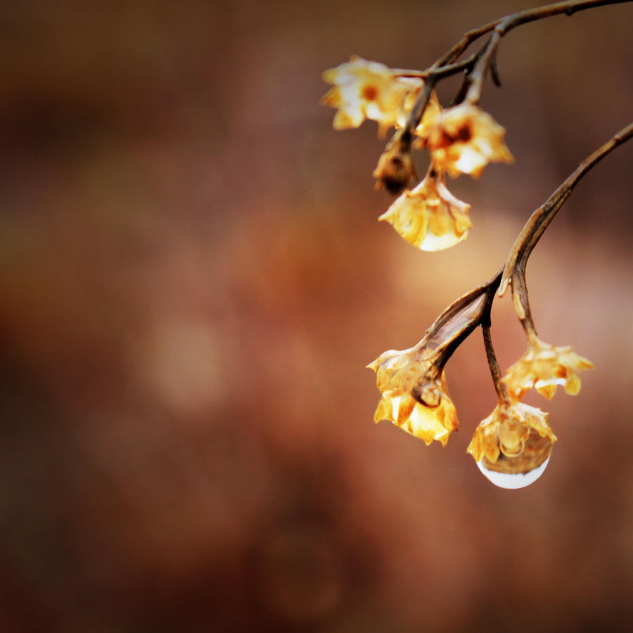 Fay Lights by nahaldnin