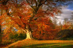 Autumn in Belvoir Forest