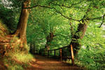 Belvoir Forest Path in Summer
