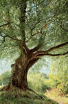 Belvoir Tree, Autumn Morning