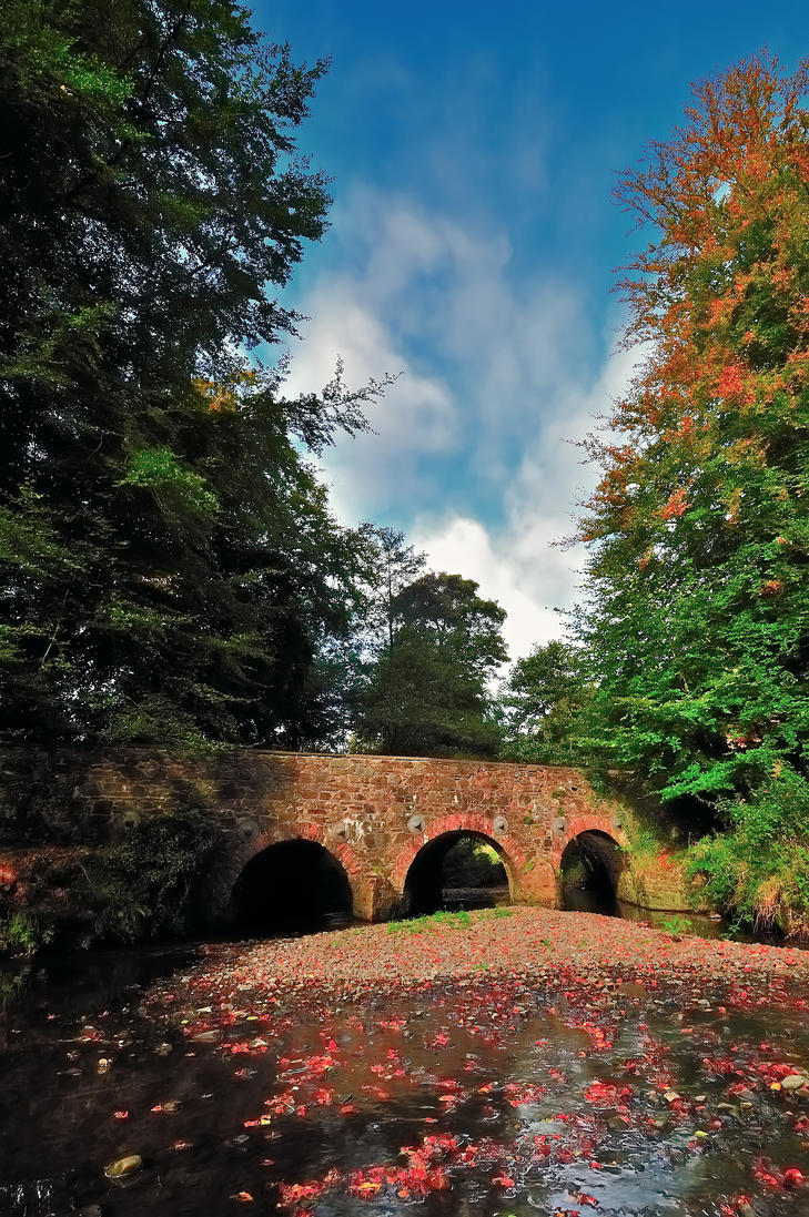 Minnowburn Beeches Autumn II by Gerard1972