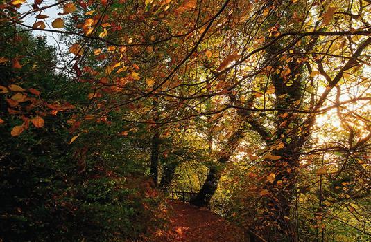 Belvoir Forest Path, Autumn 4