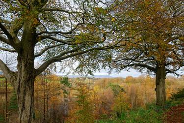 View above Minnowburn III by Gerard1972