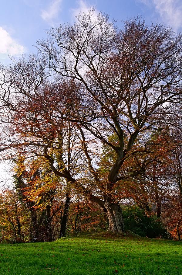 Belvoir Tree Portrait III by Gerard1972