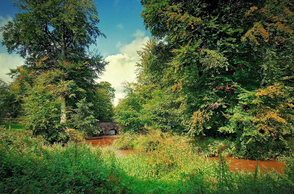 Minnowburn Beeches, August R by Gerard1972
