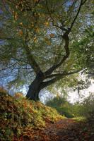 Belvoir Tree Hallowe'en 2009 2 by Gerard1972
