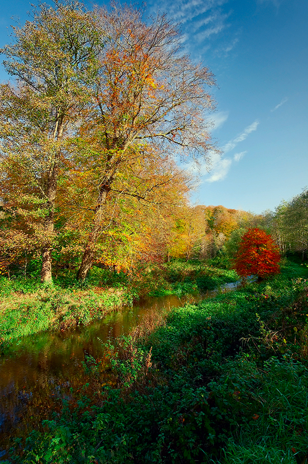 Minnowburn Autumn 09 II New by Gerard1972