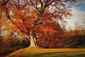 Autumn in Belvoir Forest R by Gerard1972