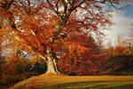Autumn in Belvoir Forest R