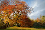Autumn in Belvoir Forest 4