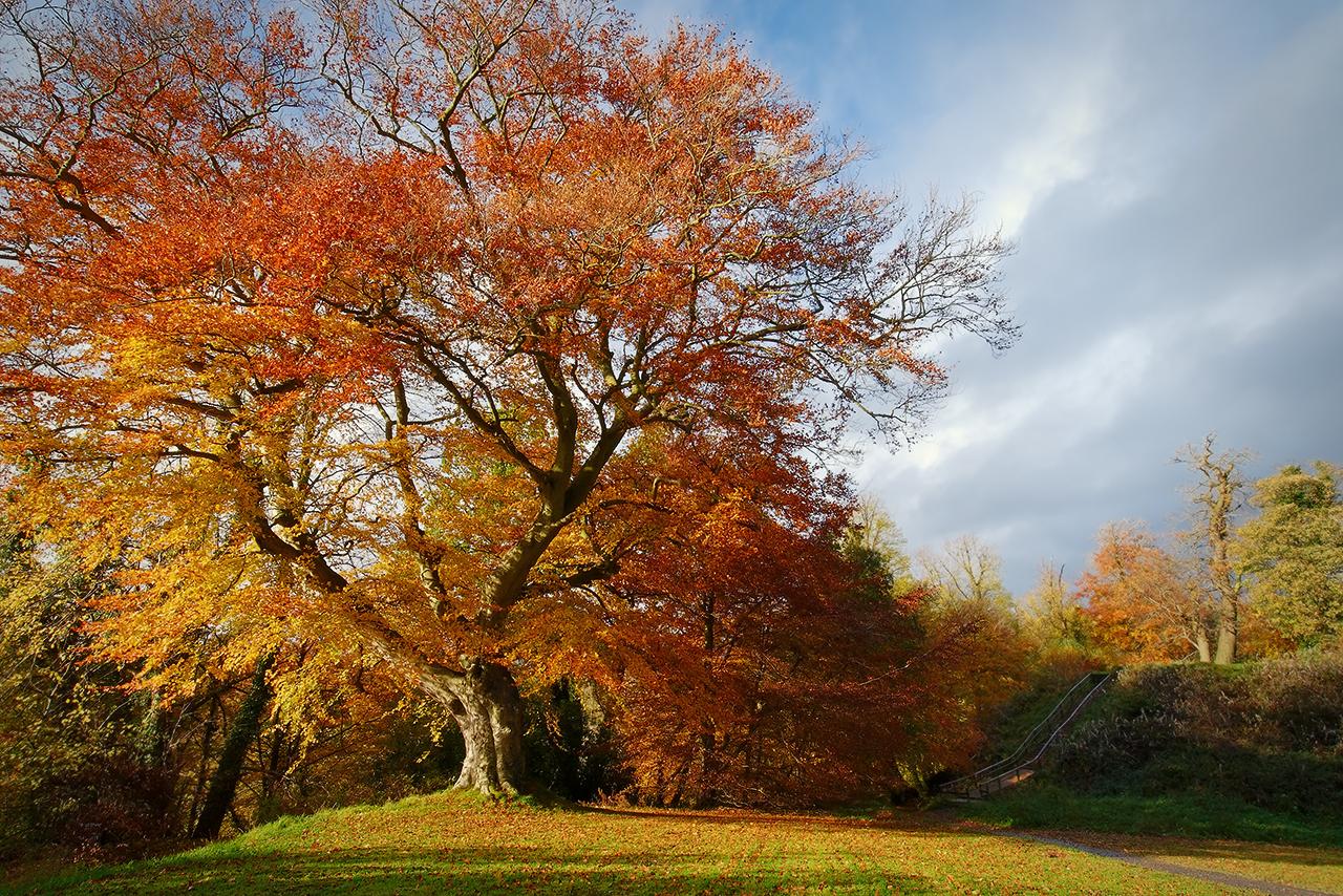 Autumn in Belvoir Forest 4 by Gerard1972