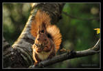 A squirrel in the setting sun