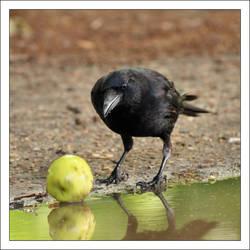 An apple a day... by Rajmund67