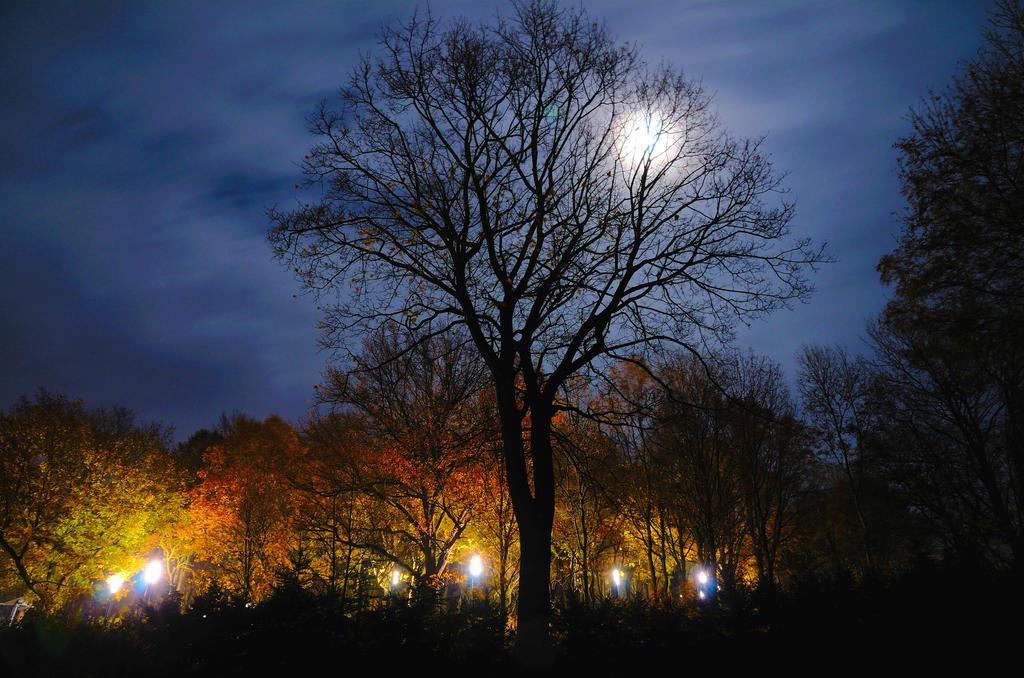Autumn in the park by Rajmund67