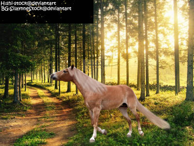 horse14 by Horse-Lover1