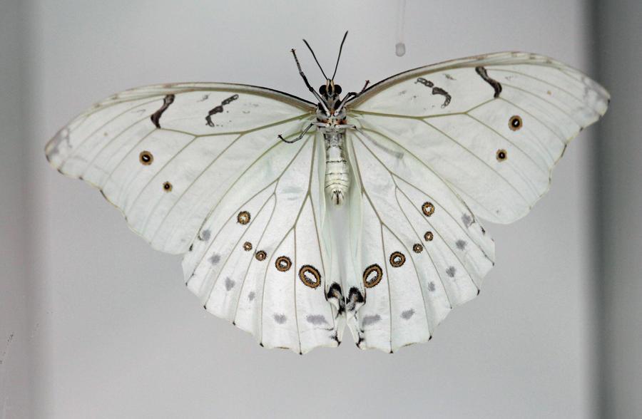 Красавица бабочка!
