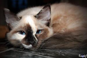 Tessa Kitty 3 by AMLensCreations