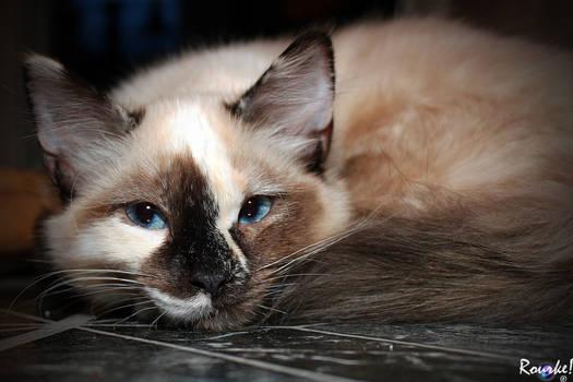 Tessa Kitty 3