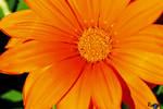 Orange Overload by AMLensCreations