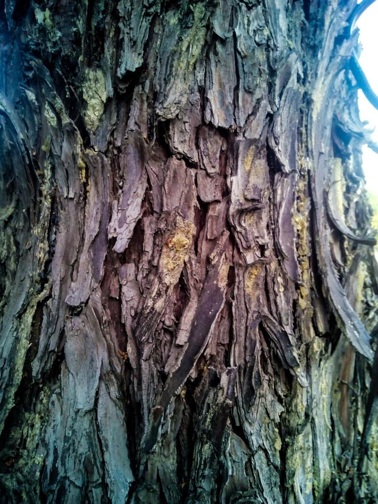 Tree Texture #1 by sofijas