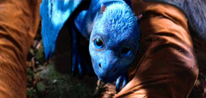 Saphira's Hatching