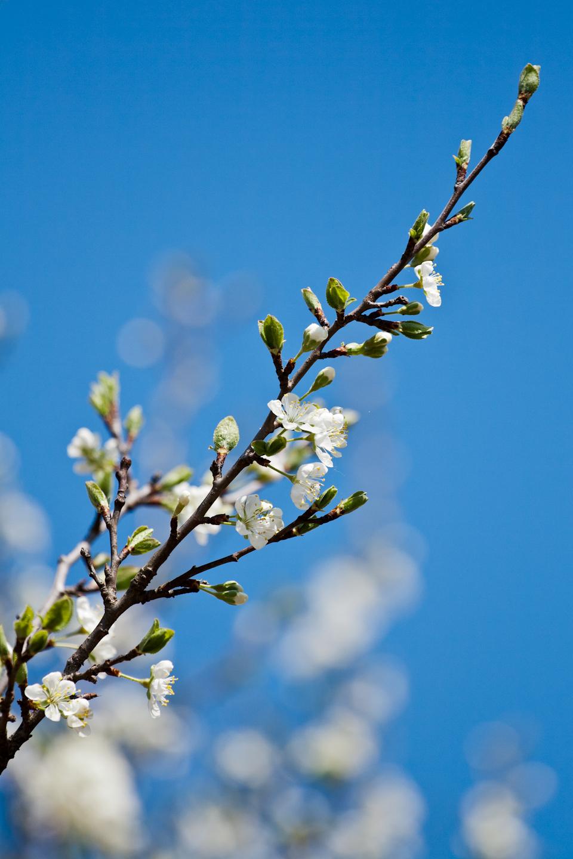 spring time by IgorKlajo