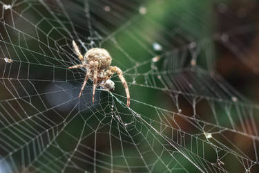 spider by IgorKlajo
